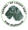 Irish Wolfhounds - Kennel of Lough ree